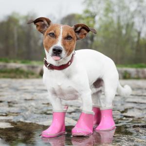 Pet Footwear
